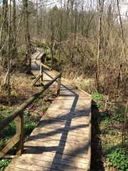 Champ-Pittet: the walk through the woods