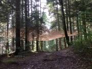 Mireille Fulpuis ,Haut Bois