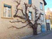 Near the Pré Brenier