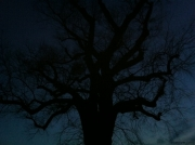 A dark tree almost lost in the night.