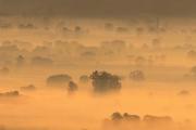 01-mists-01