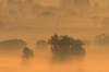 01-mists-02