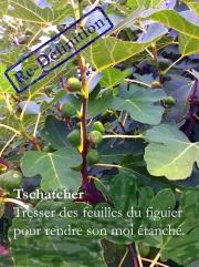 Tschatcher