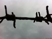 Barbed wire: so barbaric, but yet aesthetically pleasing as a shape.